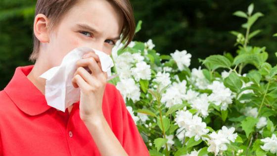 Для терапии аллергического ринита бывает достаточным устранить аллерген