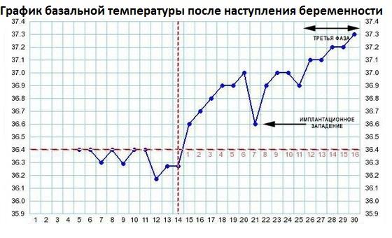 Изменения в графике при зачатии и имплантации
