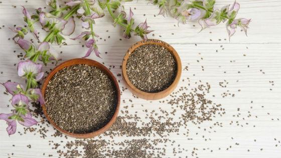 Растение шалфей с семенами