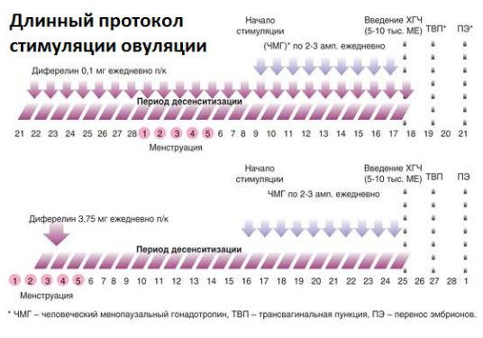 Длинный протокол стимулирования работы яичников