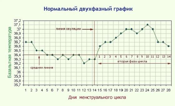 Нормальный двухфазный график до зачатия
