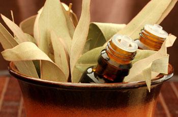 Эфирное масло эвкалипта, свойства, применение, домашние рецепты, противопоказания