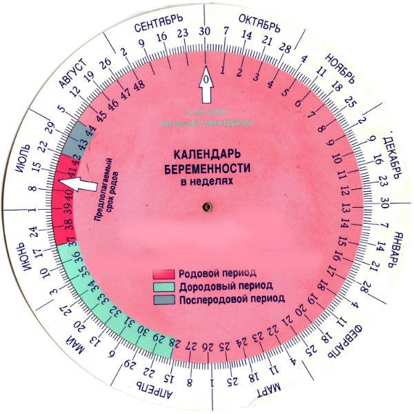 Календарь определения акушерских недель у беременной женщины