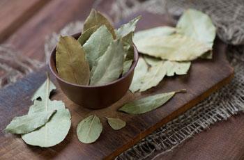 Чем полезен отвар из лаврового листа