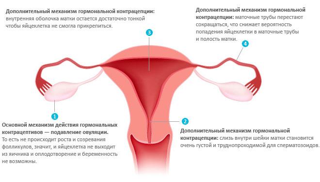 Как действуют на организм гормональные контрацептивы