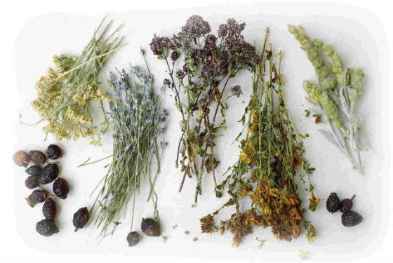 Травы и сборы с мочегонным эффектом