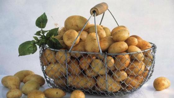 Молодой картофель с низким содержанием крахмала
