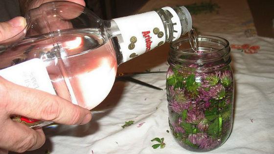 Красный клевер на водке для очищения