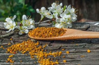 Пчелиная пыльца дозировка