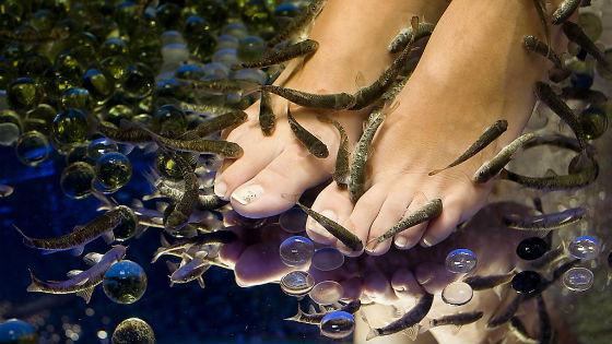 Обработка ног от огрубевшей кожи при помощи рыбок