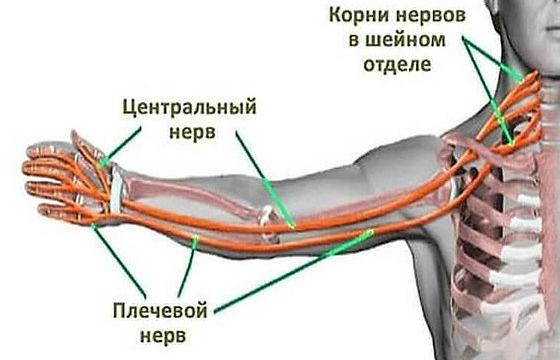 Почему происходит онемение мышц конечностей