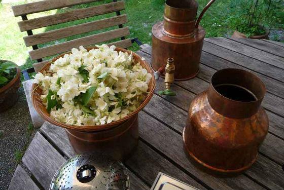 Домашнее приготовление жасминовой воды