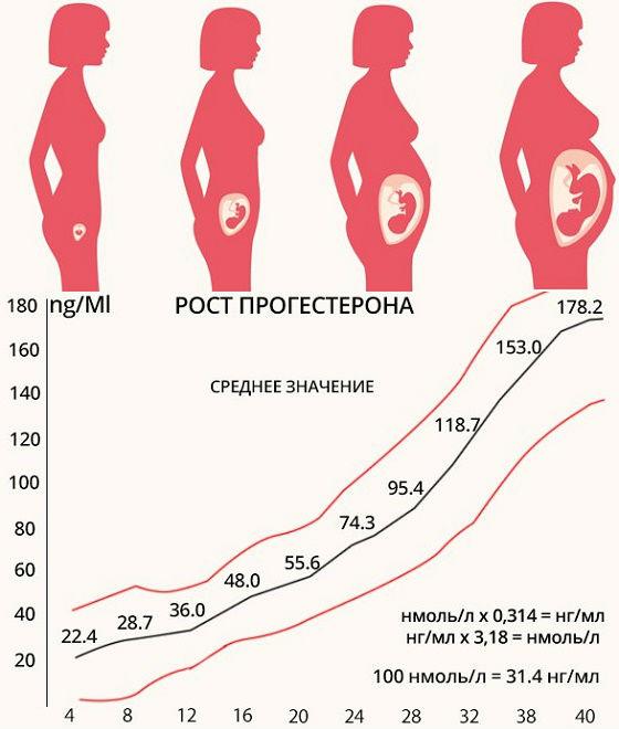 Как меняется норма гормона у беременных женщин на разных сроках