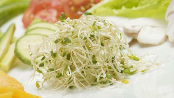 Приготовление салатов с ростками пшеницы