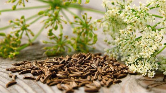 Спелые, вызревшие семена тмина