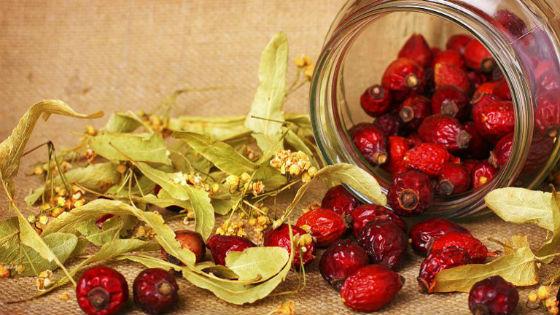 Сбор липового цвета и плодов шиповника как потогонное средство