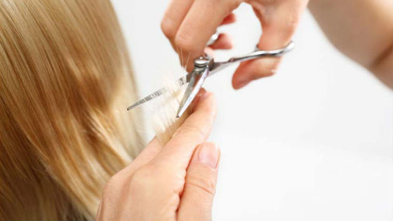Следует вовремя подстригать иссушенные посеченные концы