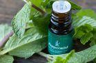 Лечебные свойства и применение в косметологии эфирного масла мяты перечной