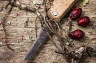 Применение корней дикой розы в народной медицине