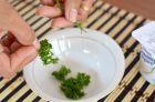 Рецепт приготовления домашней маски для кожи лица с петрушкой и йогуртом