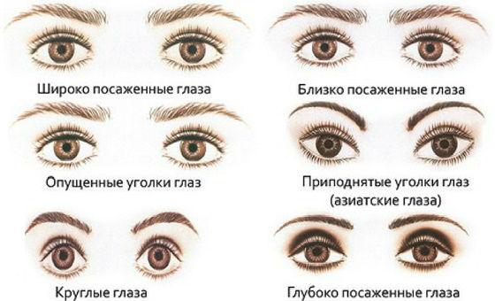Типы строения и посадки глаз